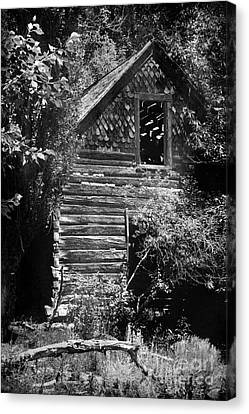 Forgotten Log Cabin Canvas Print by Cindy Singleton