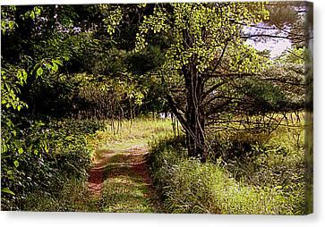 Forgotten Road Canvas Print by Tam Graff