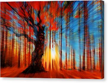 Forrest And Light Large Canvas Print by Tony Rubino