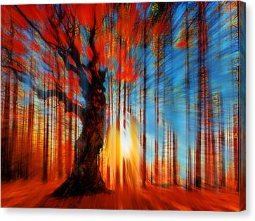 Forrest And Light Canvas Print by Tony Rubino