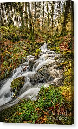 Forest Stream Canvas Print by Adrian Evans