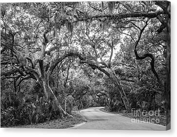 Fort Clinch Live Oaks Canvas Print by Dawna  Moore Photography