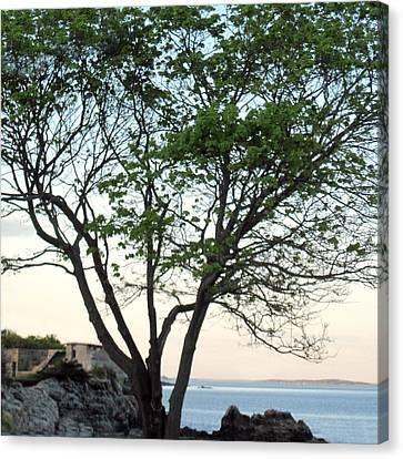 Fort Williams Twilight Canvas Print by Patricia E Sundik