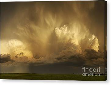 Forthcoming Calamity Canvas Print