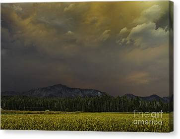 Fortuitous Canvas Print by Mitch Shindelbower