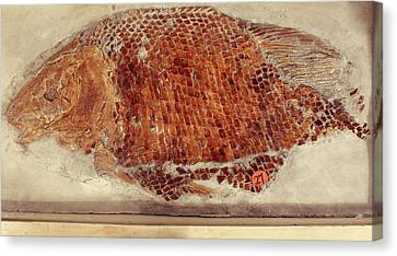 Fossil Fish Cast Canvas Print by Ucl, Grant Museum Of Zoology