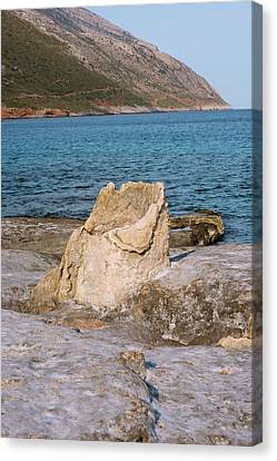Pyrite Canvas Print - Fossil Tree Stump by David Parker