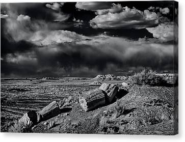 Fossilized And Petrified Trees Canvas Print by Jerry Ginsberg