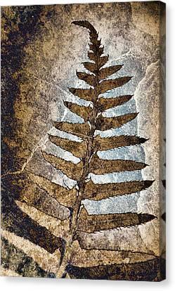 Fossilized Fern Canvas Print by Carol Leigh