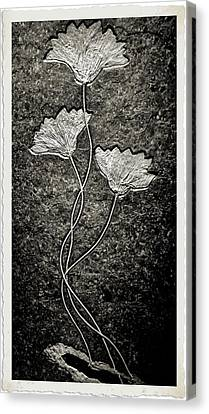 Fossilized Flowers Canvas Print by Dan Sproul