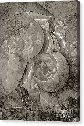 Fossilized Shell - B And W Canvas Print