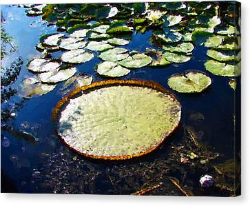 Foul Ball And The Lily Pads Canvas Print by Gary Olsen-Hasek