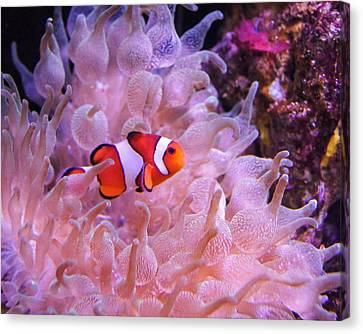 Found Him Canvas Print by Bill Pevlor