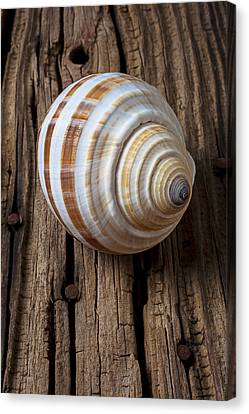 Found Sea Shell Canvas Print by Garry Gay