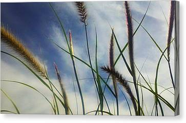 Canvas Print featuring the photograph Fountain Grass by Richard Stephen