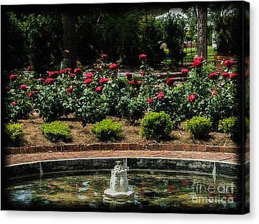 Fountain Of Roses Canvas Print by Renee Barnes