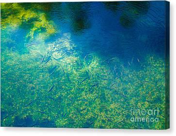 Fountain's Depth And Reflection Canvas Print by Nabucodonosor Perez