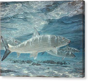 Four Bonefish Up With The Tide, 1972 Canvas Print by Stanley Meltzoff / Silverfish Press