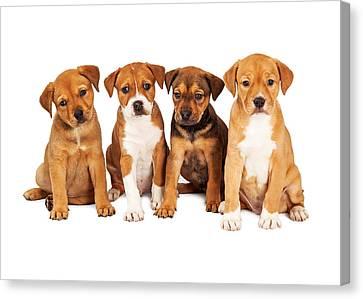 Litter Mates Canvas Print - Four Cute Puppies Together by Susan Schmitz