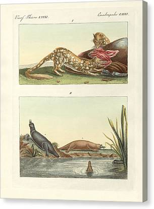 Four-footed Animals Of Australia Canvas Print