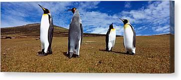 Four King Penguins Standing Canvas Print
