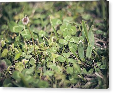 Four Leaf Clover Canvas Print by Heather Applegate