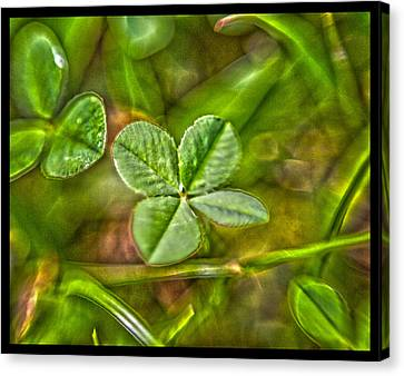 Four Leaf Clover Canvas Print by Lisa Sorrell