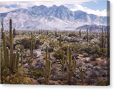 Winter Canvas Print - Four Peaks Snowstorm by Dave Dilli