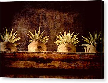 Four Potted Plants Canvas Print by Carol Leigh