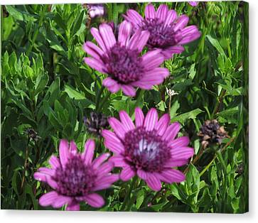 Four Purple Flowers Canvas Print by Tina M Wenger
