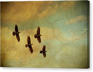 Canvas Print featuring the photograph Four Ravens Flying by Peggy Collins