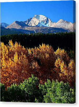 Canvas Print featuring the photograph Four Seasons by Steven Reed