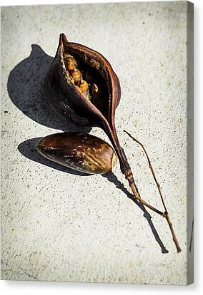 Four Seeds In A Pod Canvas Print by Camille Lopez