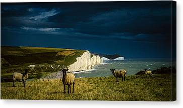 Seaford Canvas Print - Four Sheep And Seven Sisters by Chris Lord