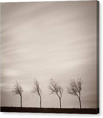 Four Trees Canvas Print by Dave Bowman