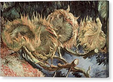 Four Withered Sunflowers Canvas Print
