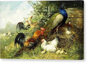 Fowl And Peacocks Canvas Print by Arthur Fitzwilliam Tait