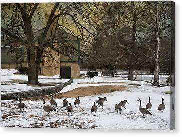 Fowl Weather Canvas Print by Robin-Lee Vieira