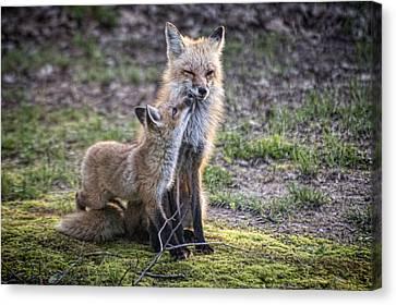 Fox And It's Cub Canvas Print