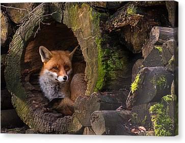 Hidden Canvas Print - Fox by Cees Van Ginkel