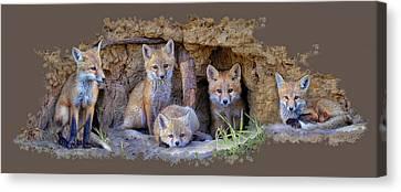 Fox Family Of Wabamun II Canvas Print by Reg Faulkner