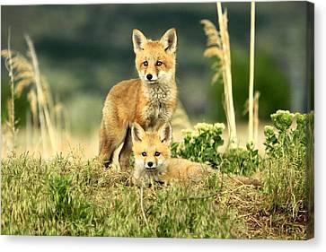 Fox Kits II Canvas Print
