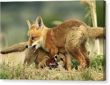 Fox Kits Canvas Print