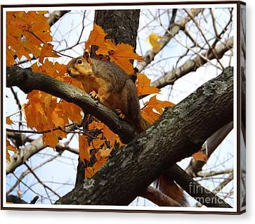 Fox Squirrel In Autumn Canvas Print by Sara  Raber