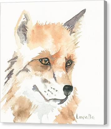 Fox Study 1 Canvas Print by Kimberly Lavelle