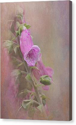 Foxglove Canvas Print by Angie Vogel