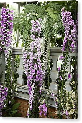 Foxglove Flowers Of Many Colors And More Foxglove Flowers Canvas Print by Jerry Cowart