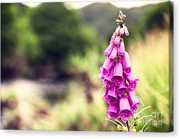 Foxglove Flowers Canvas Print - Foxglove by Jane Rix