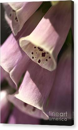 Canvas Print featuring the photograph Foxglove by Joy Watson