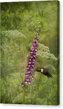 Foxglove Queen Ann's Lace And The Hummingbird Canvas Print by Diane Schuster